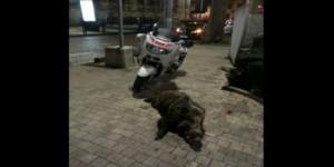 l-animal-sauvage-a-pu-etre-isole-devant-le-plais-de-justice_2415589_800x400